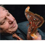 David Attenborough butterfly signed authentic autograph photo