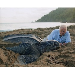 David Attenborough Turtle genuine signed authentic signature photo